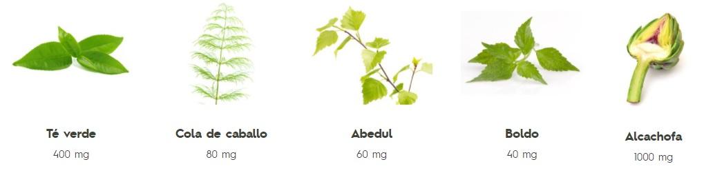 AquileaDetox + Quemagrasas Sticks Solubles Ingredientes